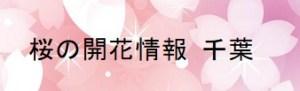 桜の開花情報 千葉