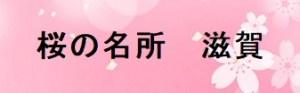 滋賀の桜の名所