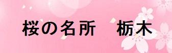 栃木の桜の名所