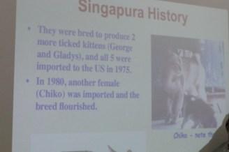 シンガプーラブリードセミナー Singapura Cat Breed Seminar