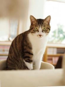 猫式の猫ちゃん
