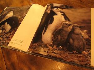 石垣島のカフェ&カレー「トラベラーズカフェ朔」のペンギン大陸
