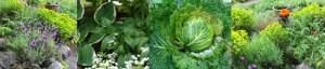 news4_gardenstrip