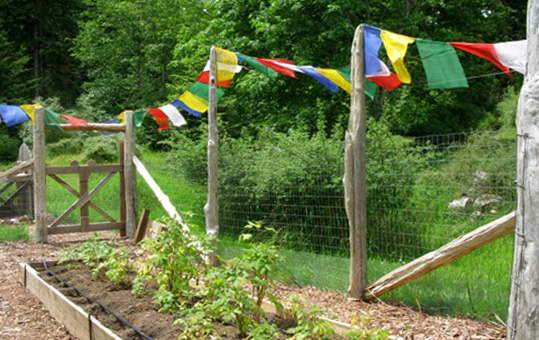 The garden at SCC