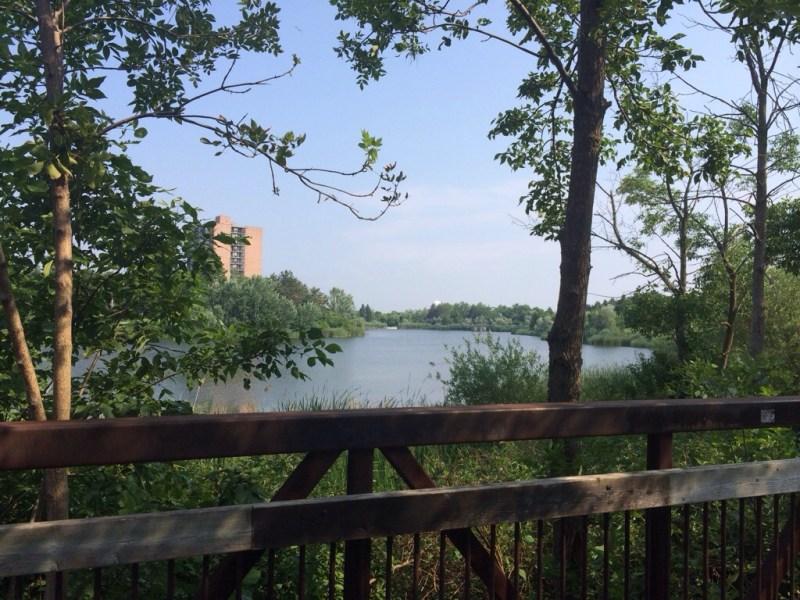 Scotiabank Toronto Waterfront Marathon Training Recap Week #2