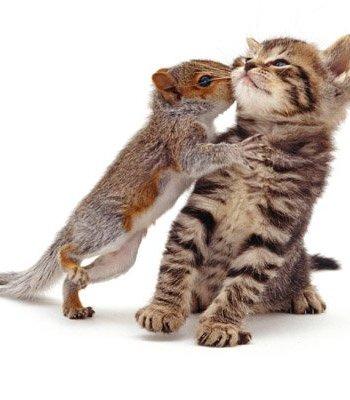 Squirrel Kissing Kitten Card