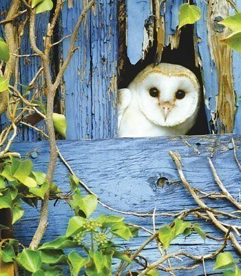 Barn Owl Photographic Card by Heart of a Garden