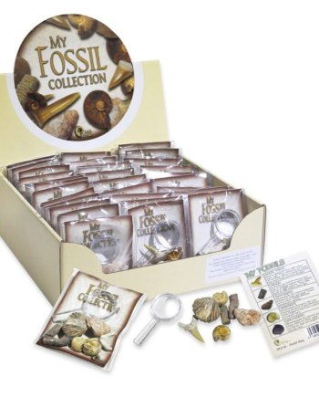 My Fossil Collection with Magnifier