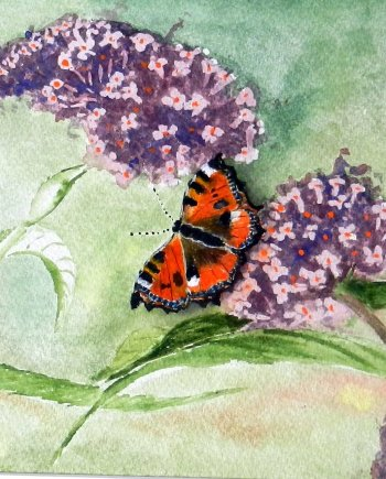 Buddleia and Wild Butterfly Card