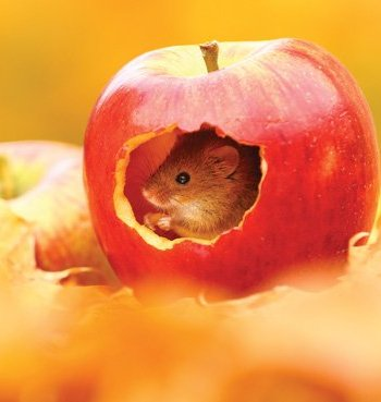 Harvest Mouse Card