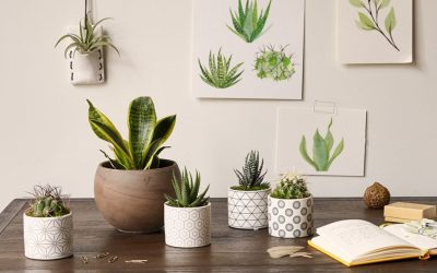 WHY YOUR OFFICE NEEDS  PLANTS & FLOWERS