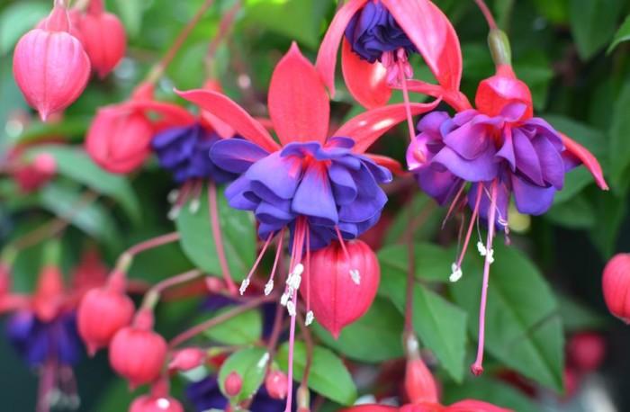 50 Gambar Bunga Dan Tanamah Hias Terindah Di Dunia Gambar