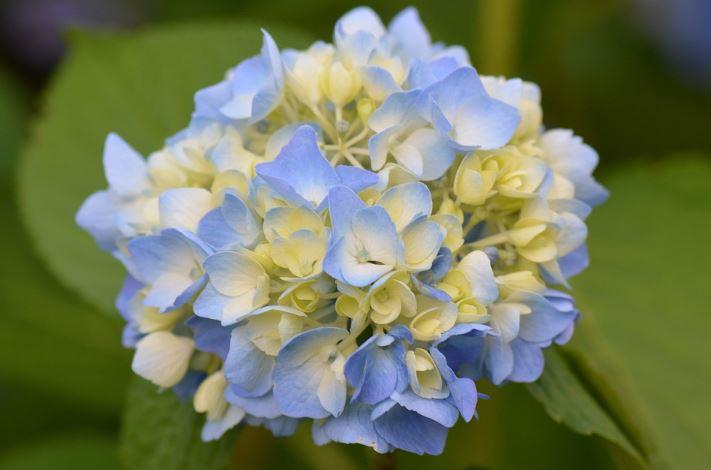 50 Gambar Bunga dan Tanamah Hias Terindah di Dunia (GAMBAR HD
