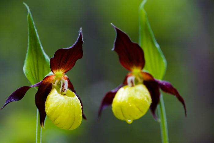 flowers.org.uk