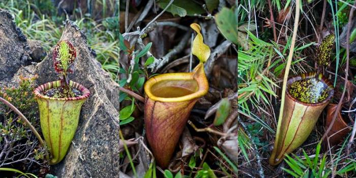 sosbiodiversity.blogspot.com