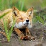 111 Nama Binatang Dalam Bahasa Inggris, TERLENGKAP (A-Z) | Nama Hewan Bahasa Inggris
