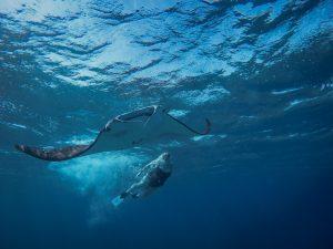 Manta Point, Sailing Trip Komodo, Labuan bajo
