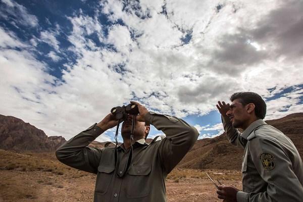 بازگشت پرندگان قاچاق شده به دامان طبیعت - کرمان