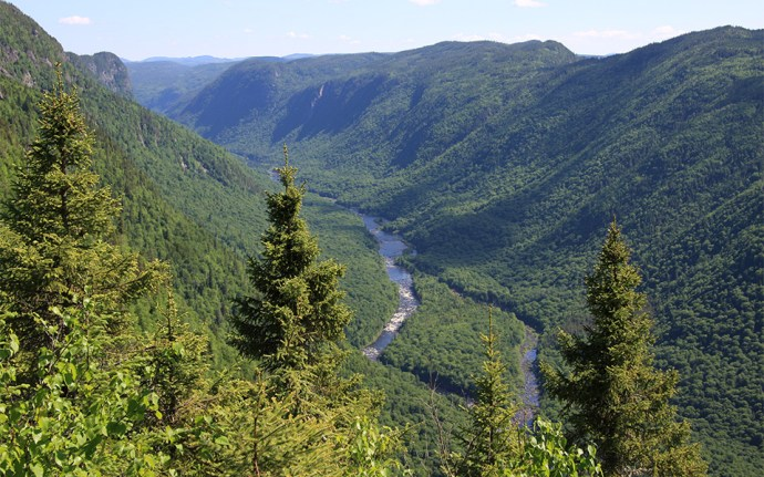دودرصد جنگلهای دنیا در  شمال انتاریو قرار دارد