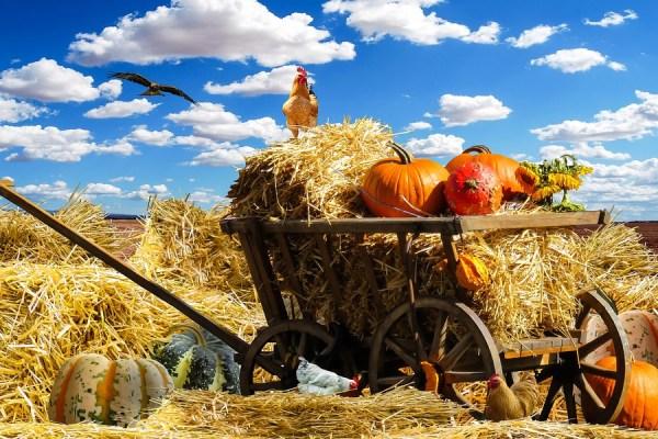 اکتبر ماه برداشت محصولات دیگری در انتاریو است