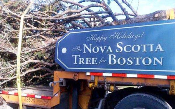 هلیفکس هر سال به عنوان قدردانی یک درخت بزرگ کریسمس به بوستن هدیه می کند.