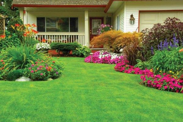 چمن و گیاهان گاز کربنیک هوا را جذب کرده بدین ترتیب به سالم سازی هوا کمک موثری می کنند.