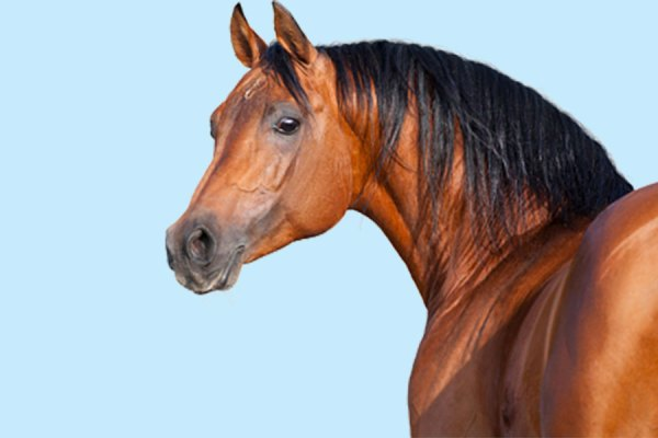 horsei