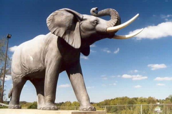 فیل جامبو در شهر سنت توماس