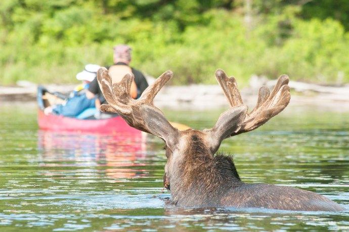 کانادایی ها در تمام طول سال به دیدن الگون کوئین پارک می روند.