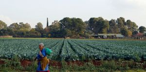 A worker leaves after working at a farm in Eikenhof, south of Johannesburg. File photo. Image: SIPHIWE SIBEKO REUTERS