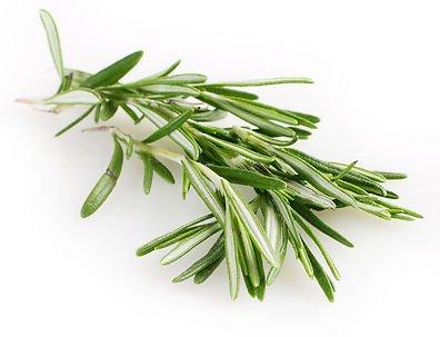 Fűszernövények Rozmaring
