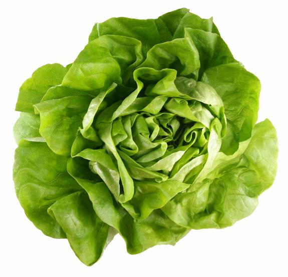 Zöldsaláta - fejes saláta