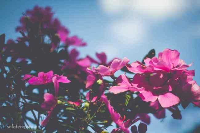 Amy-Wineflowers-7