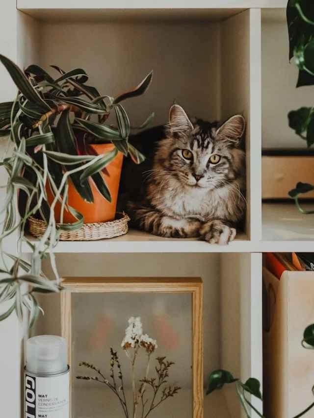Pets e Plantas: um guia completo
