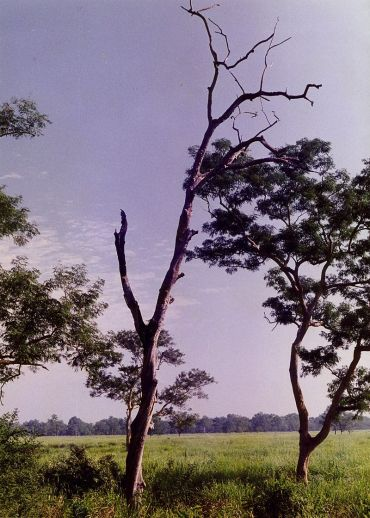 800px-Tree_solitary