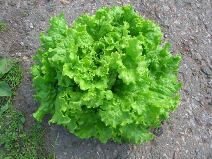 афицион салат