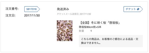 ギルトシティ啓翁桜 2017年11月