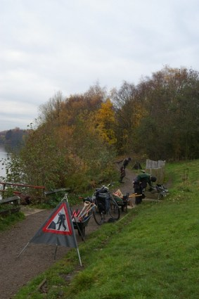 Clearing self-seeded trees at lake edge