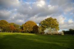 Trees, bonfire and hedge