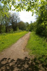 The widened path and cowslips