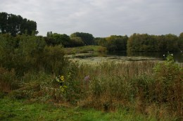 Volunteer at work in the reed beds