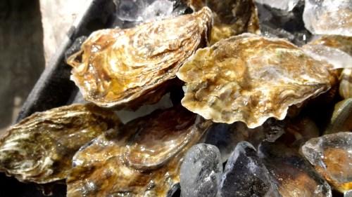 Hog Island Sweet Water Oysters.