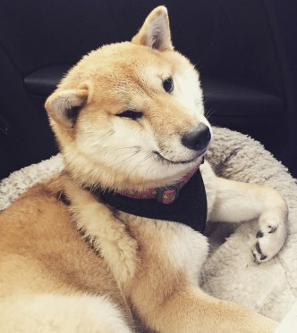 Kuma's First Road Trip!