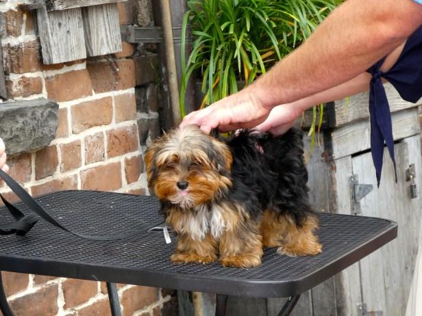 Cute Doggy.