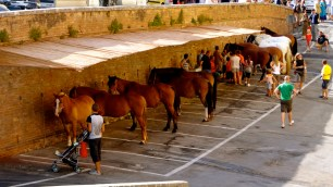 Horses Before the Race.