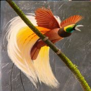 bird of paradise for wp