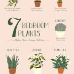7 Bedroom Plants To Help You Sleep Better The Sleep Matters Club