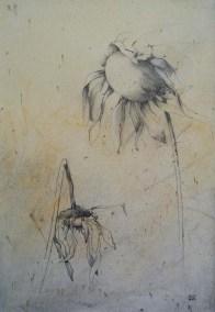 Girasoles secos 29x21
