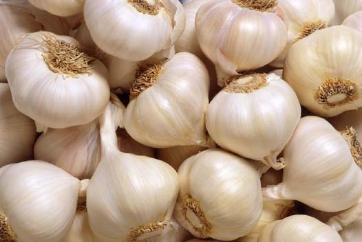 Garlic is a natural antibiotic food