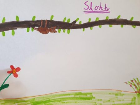 A sloth, by Alice